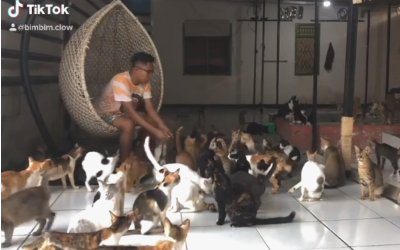 ¡Este indonesio cuida 480 gatitos!