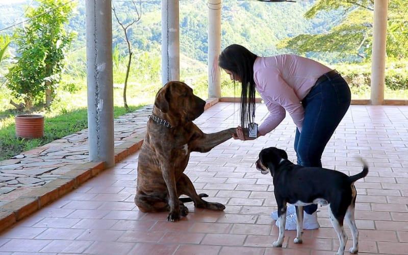Comenzó el censo para perros de manejo especial