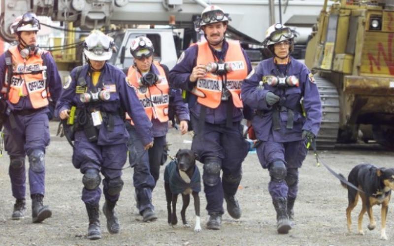 Los héroes de 4 patas en el atentado del 11 de Septiembre