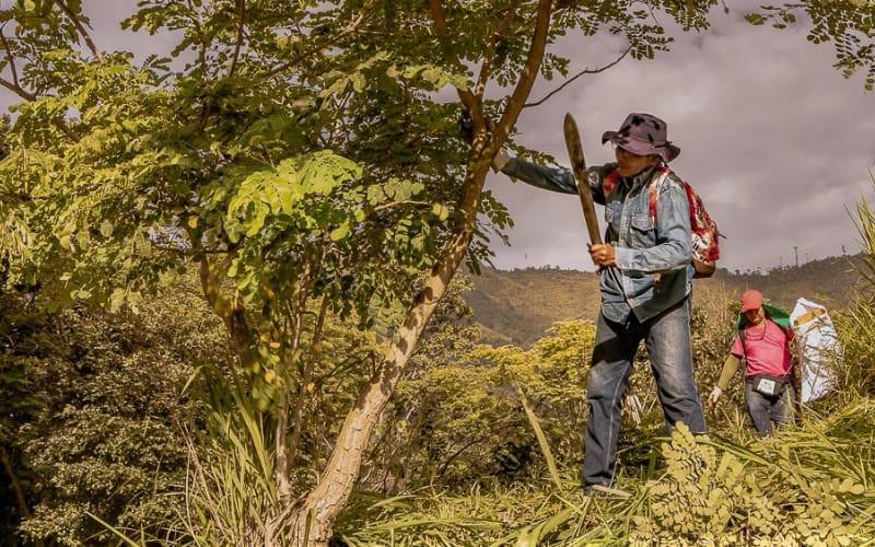 En Girón limpiaron las zonas verdes del Paraíso Bajo