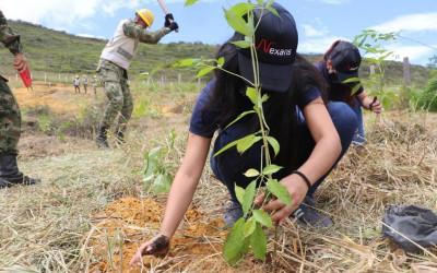 Se sembraron más de mil 600 árboles en Los Santos