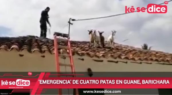 'EMERGENCIA' DE CUATRO PATAS EN GUANE, BARICHARA